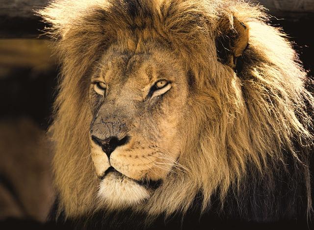 ich-bin-mutig-wie-ein-Löwe